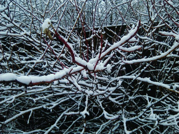 Winter Cold Temperature Snow Branch Weather Day Nature Outdoors Bare Tree Tree No People Frozen Beauty In Nature Close-up
