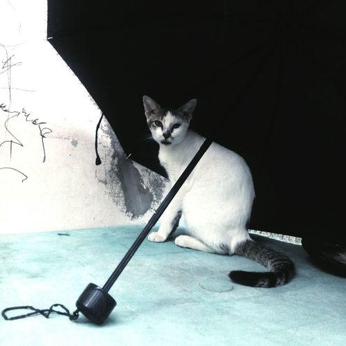 "He knows where to go when it rains.. 🐈☔ Cute Pets Catoftheday""Spotty"" Shocked Face Black & White Fresh On Eyeem  Showcase: June 2016Natural Light Portrait"