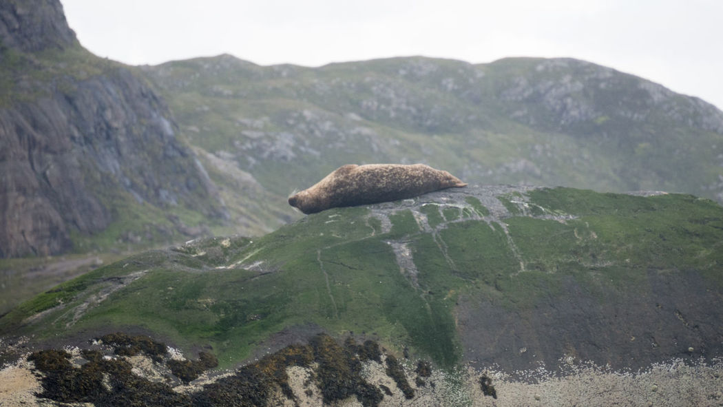 Chillaxing Seal off the Shore of Loch Coruisk Scotland Animals In The Wild Beauty In Nature Belly Up Chillax Day Exhausted Isle Of Skye Landscape Lazy Loch Coruisk Mountain Nature No People One Animal Outdoors Peaceful Relax Rest Seal Sealion  Sky Sleep Sleepy Take A Break