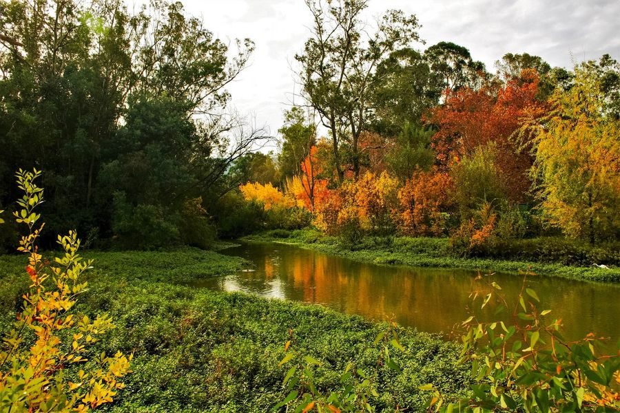 Overcast, making an interesting canvas-like look for this scene. Parks River Tree Autumn Nature Beauty In Nature Leaf Tranquil Scene Scenics Lush Foliage Tranquility Lake Forest Outdoors Day No People Green Color Water Growth Reflection