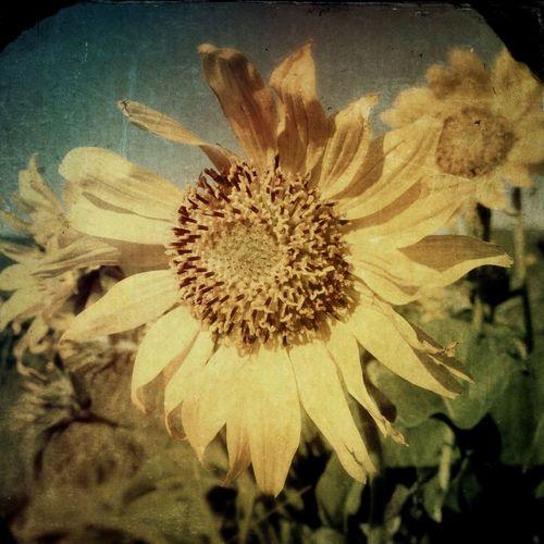 Flower Porn IPhoneArtism EyeEm Nature Lover Terra Flora
