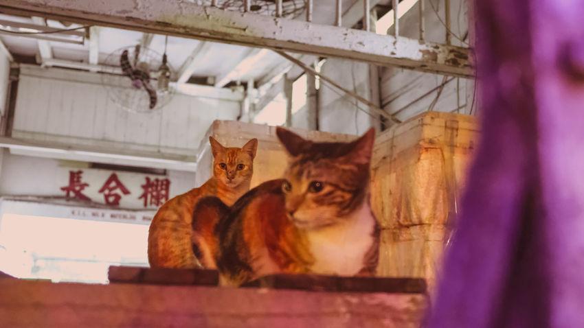 Pets Domestic Cat Animal Themes Close-up