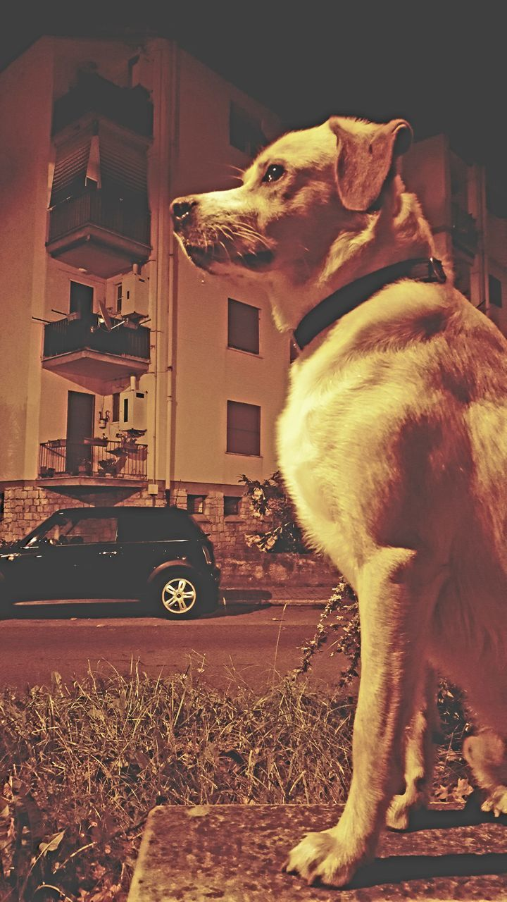 domestic animals, animal themes, pets, one animal, dog, mammal, no people, built structure, standing, day, indoors, sitting, building exterior, close-up