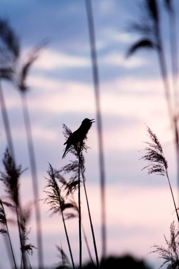Animal Themes Bird One Animal Sunset Animals In The Wild Sky Cloud Plant Nature Cloud - Sky Water Beauty In Nature Outdoors Sight Sesion Canon Photo Polandsights Majestic Beauty In Nature