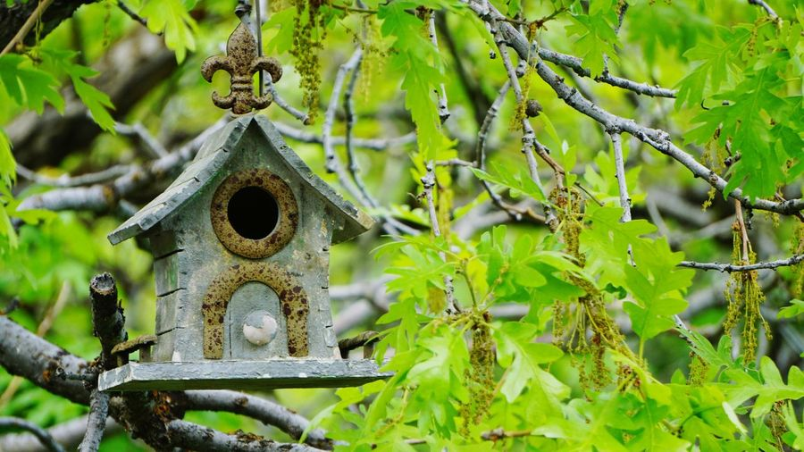 birdhouse Weathered Wood Branches Branches And Leaves Wooden House Old Wood Weathered Birdhouse Old Wooden Birdhouse Bird Photography Hanging In Tree Leafs Photography Leafs Green Leafs Background Birdhouse In Tree Branch Leaf Hanging Close-up Green Color Blooming Pollen Growing Plant Life