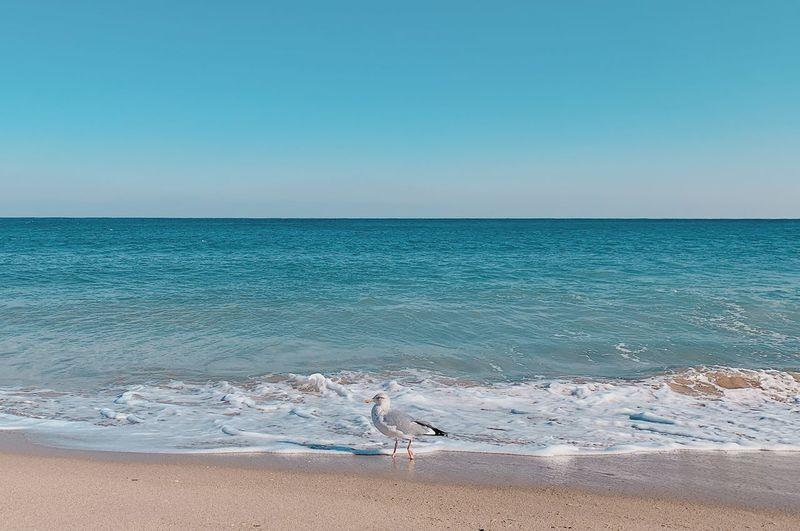 Seagull on beach against clear sky