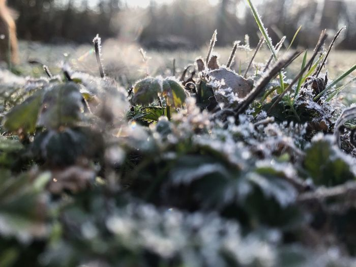 Icy morning Winter Morning Wintertime Winter Frozen Hoarfrost Plant Growth Winter Cold Temperature Selective Focus Snow Nature No People Day Close-up Beauty In Nature Frozen Field Land Green Color Tranquility Outdoors Ice