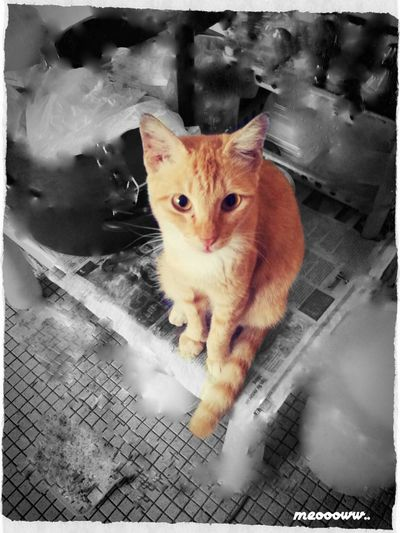 meoowwwww... Capa Filter Hi! Hello World