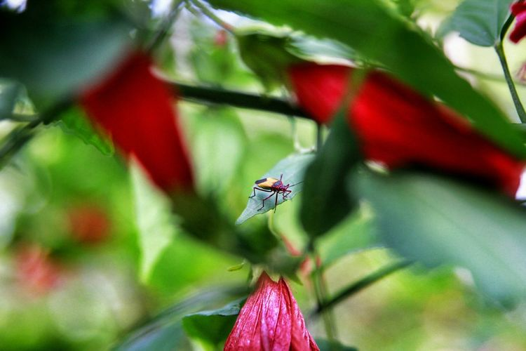 Photography Beautiful Nature Animals Tijuca's Forest Colors Nature EyeEm Nature Lover Details Insects  Insect_perfection
