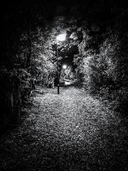 WoodLand HappyHaloween BestEdits Brighter Playing With Pictures. Autumn Leaves Haloweeniscoming Night Time Weathered Wood Shadow And Light Black & White EyeEmBestPics Black And White Photography HuaweiP9 Newcastle Upon Tyne Silhouette Urbanphotography No People Travel Destinations Fresh on Market 2016