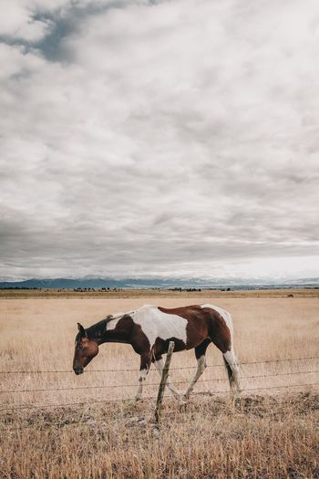 EyeEm Selects Cloud - Sky Horse Sky Nature Animal Themes Day No People Standing Mammal One Animal Field Outdoors Animals In The Wild Beauty In Nature Grass Domestic Animals