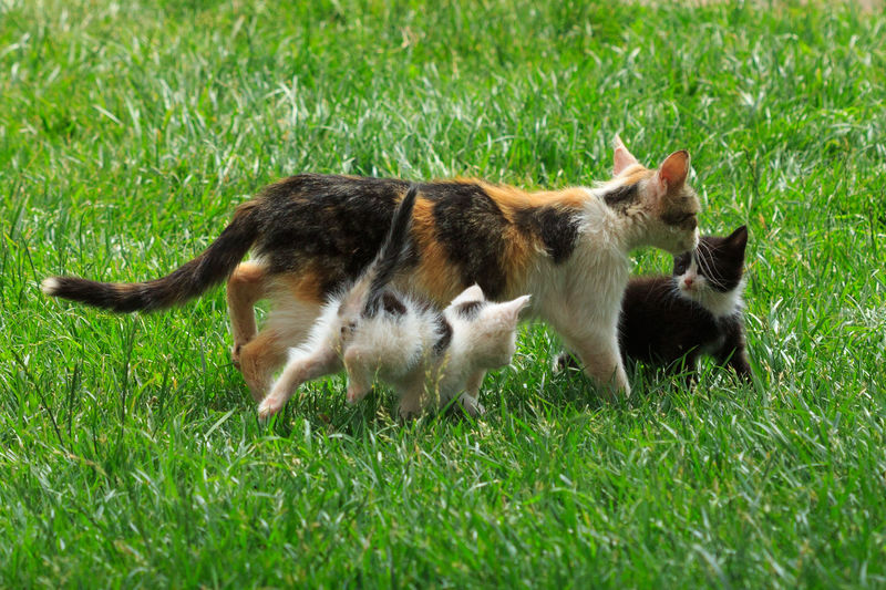 Cat and kittens Grass Animal Themes Baby Animals Domestic Animals Cats Catslover Kittens In My Backyard Young Animal Pets Cat Lovers Cat Cat And Kitten