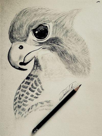My Draw ♥ Drawing ✏ Aguila My Favorite  El mejor de mia dibujos hasta el momento <3 :3