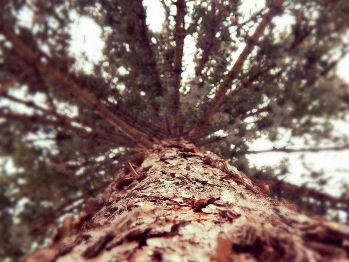 Bark Nature