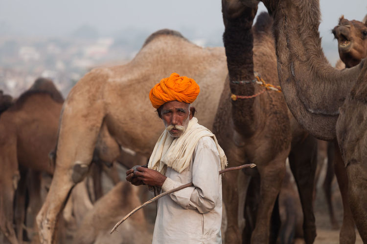 ASIA Camels Desert Beauty India Pushkar Rajasthan Rajasthani Culture Traditional Clothing