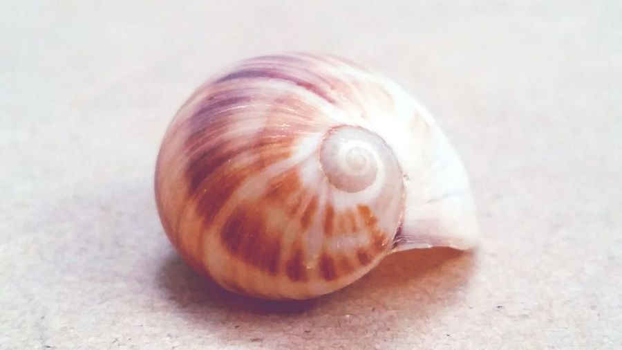 Little Shelter 🐚 Close-up Spiral Nature No People Gastropod Day Shell Empty Shell Empty Beach Shells Natural Shelters Shelter Insect Shell Soft Shell Small Shell Little Shells Little Shell Cute Shell  Lonely Shell Ocean Sand Details Of Nature Details Textures And Shapes Shell Designs EyeEmNewHere