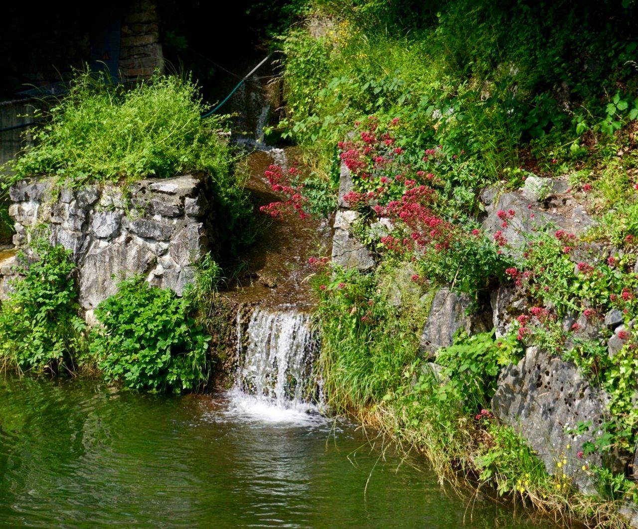 water, plant, nature, rock, solid, beauty in nature, no people, rock - object, scenics - nature, waterfall, flower, forest, day, outdoors, tree, green color, flowering plant, lake, formal garden, flowing water, stream - flowing water, ornamental garden, flowing