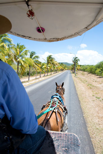 Eco-friendly transport Animal Themes Coach Cuba Cuban Driving Drivingshots Horse Hot Men One Animal Palm Trees Real People Sitting Sky Straight Road Street Transportation Unrecognizable Person Warm Day