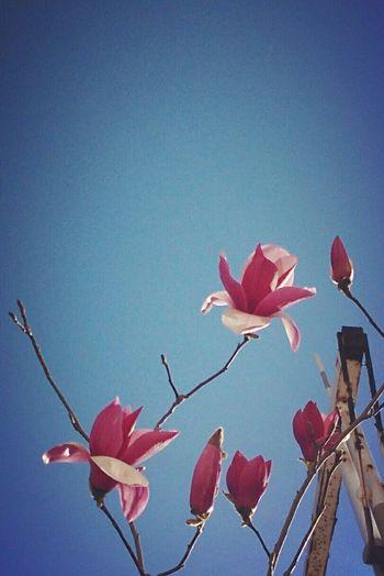 春天尚早,还需努力 Enjoying Life
