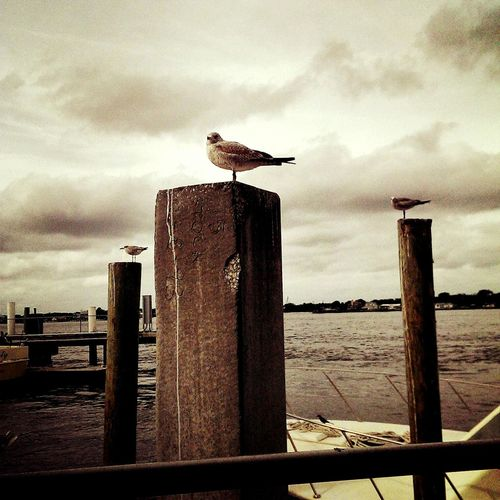 Seagulls Winter Storm Safeharbour