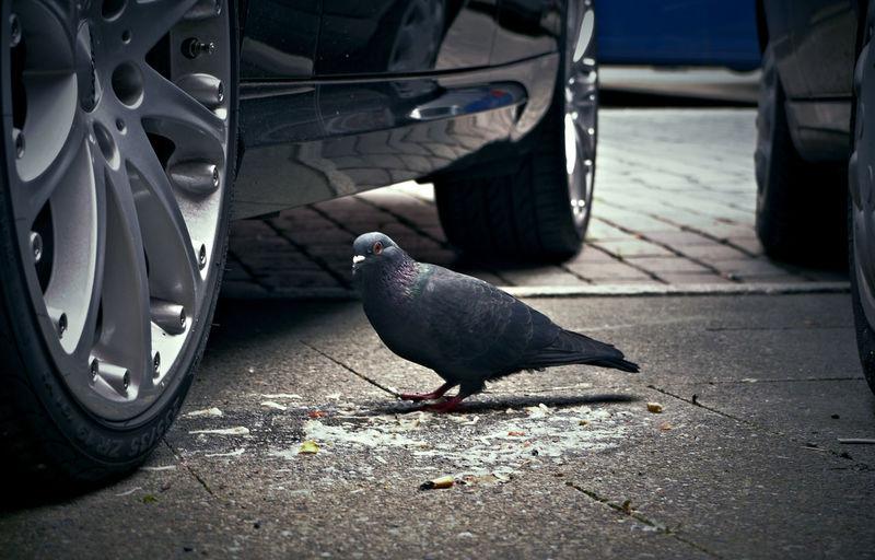 Close-up of bird perching on car