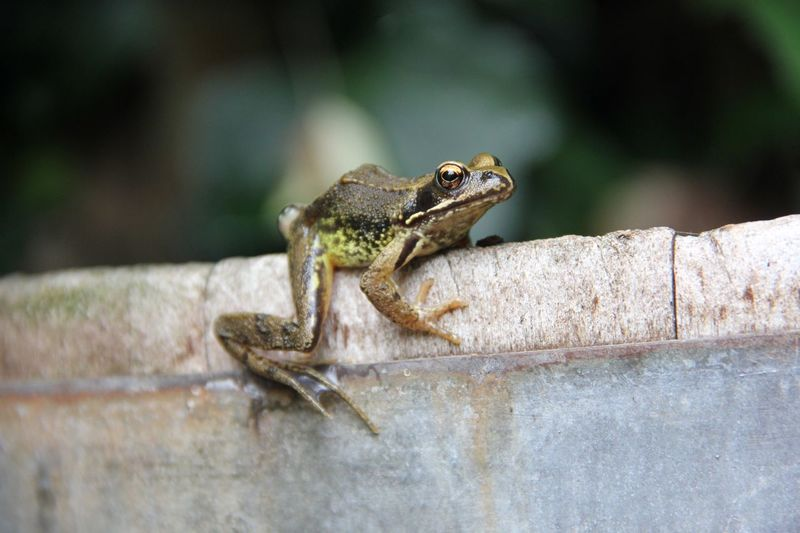 Close-up of sunbathing frog on wall