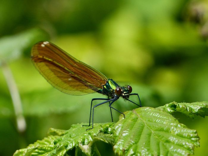 Close-up of damselfly on plant outdoors