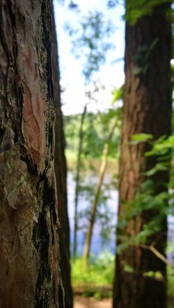 Focus On Foreground Tree Day Outdoors Forest Nature No People Sky Close-up Growth Beauty In Nature Tree Trunk Przyroda Life Litwa Lietuva Lithuania Flora Plant River