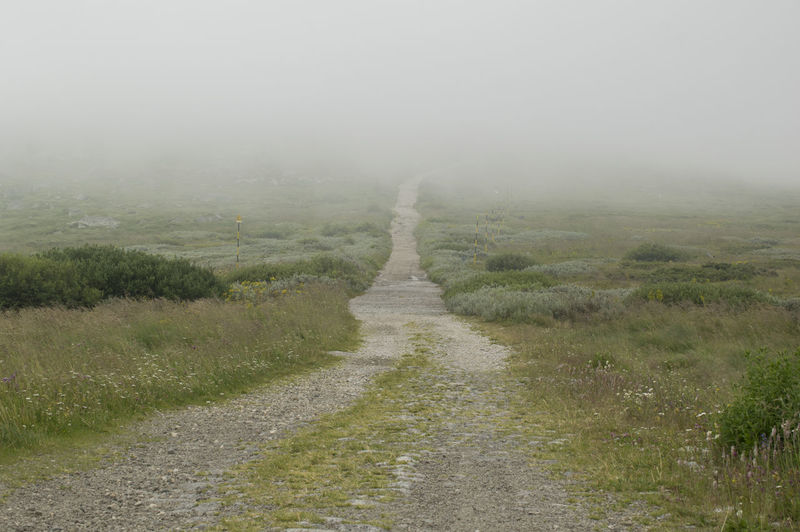 Moutain View Foggy Weather Moutain Road Pathway Path In Nature Stay Out Fog Power In Nature Water Tree Rural Scene Extreme Weather Weather Wet Grass