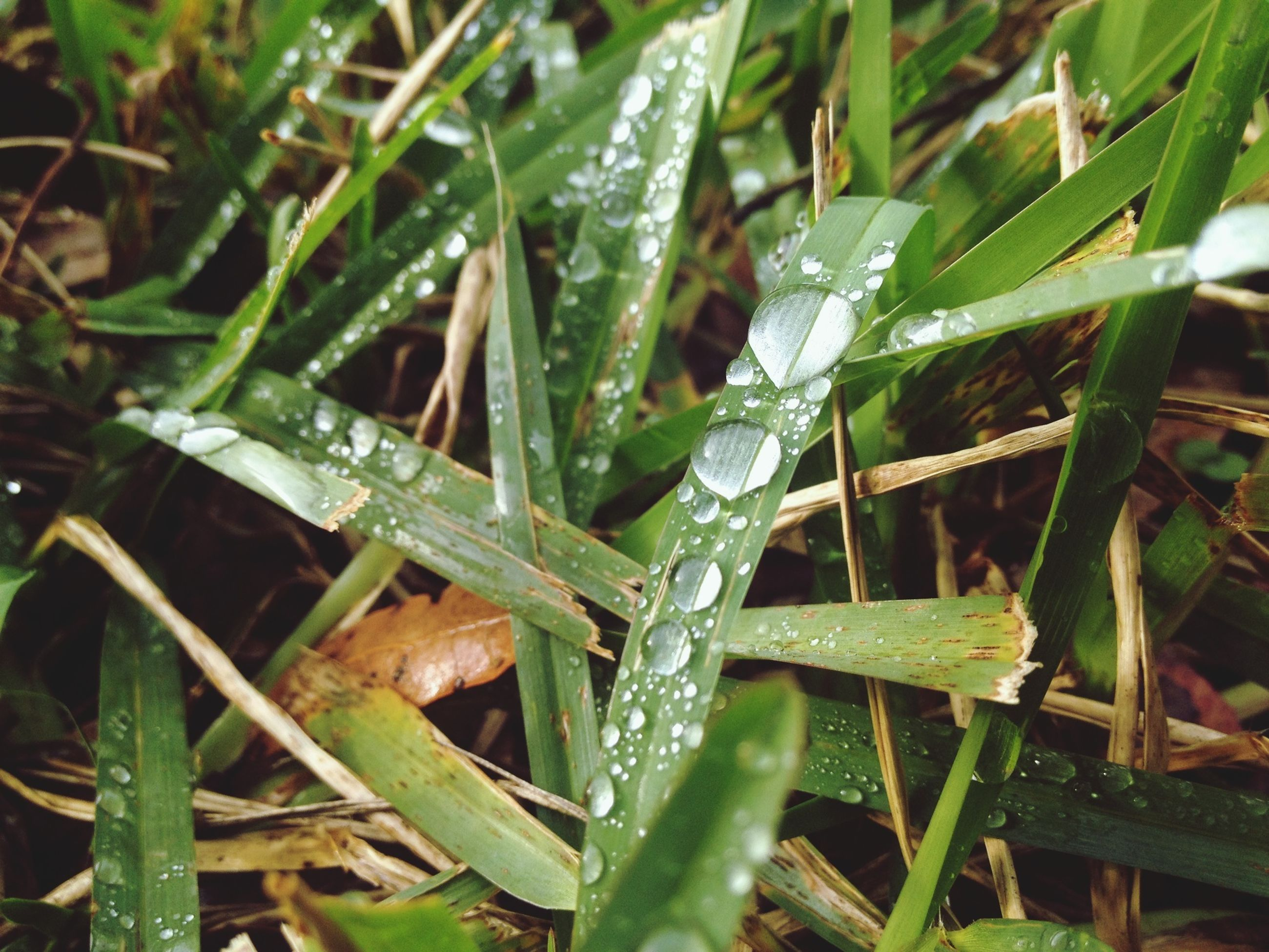 drop, water, wet, dew, growth, close-up, nature, green color, freshness, grass, raindrop, beauty in nature, rain, leaf, plant, droplet, blade of grass, fragility, purity, focus on foreground