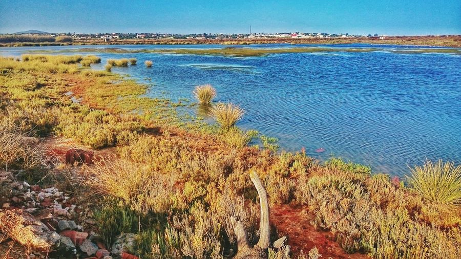 Outdoors Tranquil Scene Tranquility Beauty In Nature Water Tourism Solitude Vacations Sea Plant Nature Color Palette Portugal Color Photography Colour Of Life Hello World Idyllic Landscape Relaxing Colorful