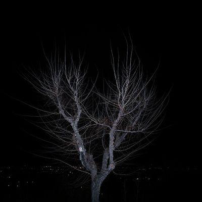 Tree árbol Invierno