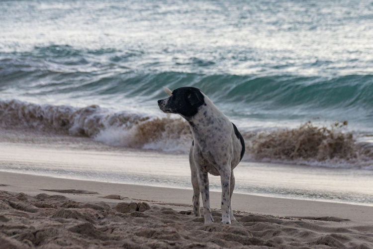 Dog on the beach at sunset Beach Photography Dogs Stray Dog Beach Beachphotography Dog Dog Love Dog On The Beach Domestic Animals Stray Cat