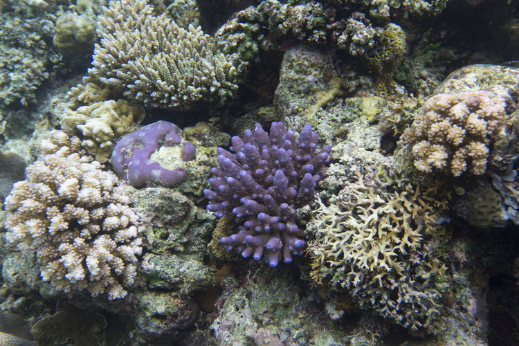 Coral reef in
