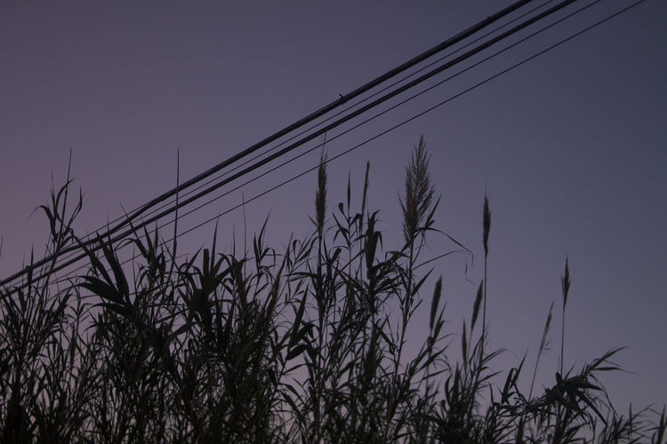 Sky Plant Growth No People Nature Low Angle View Tranquility Beauty In Nature Silhouette Outdoors Clear Sky Dusk Scenics - Nature Tranquil Scene Day Sunset Close-up Land Non-urban Scene Grass Stalk