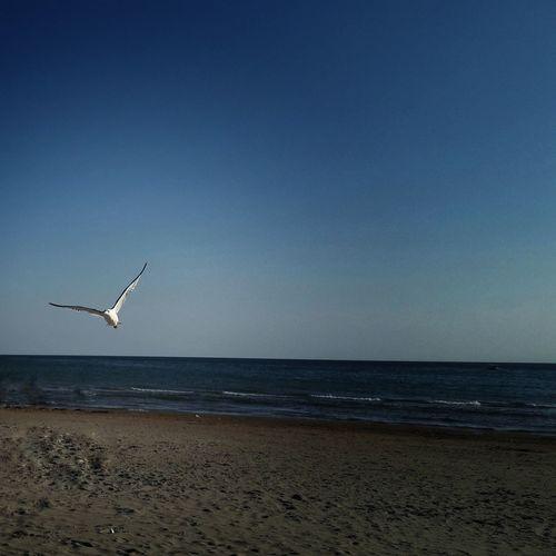 Bird flying over beach against clear sky