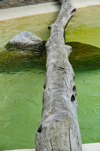 Tree Nature Plant No People Trunk Water Tree Trunk Day Tranquility Green Color Land Beauty In Nature Lake Outdoors Textured  Rock Wood - Material Grass Driftwood Bark