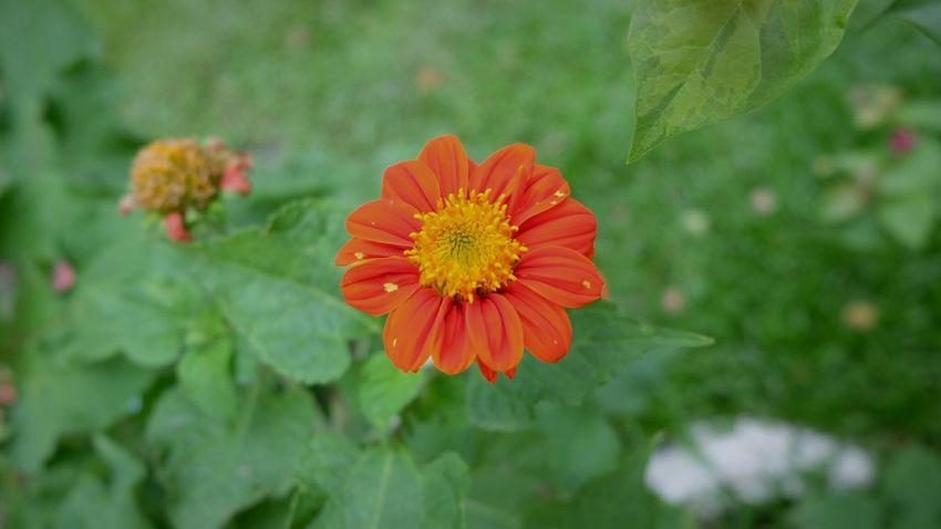 Kpstoryʢ•ᴥ•ʡ First Eyeem Photo Nature Flower Park