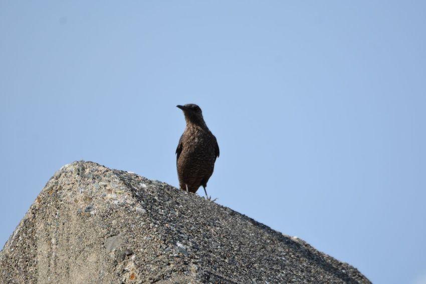 Bird Animal Themes Animals In The Wild Animal Animal Wildlife Vertebrate One Animal