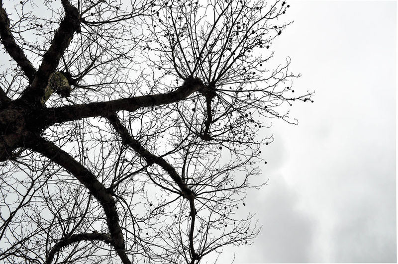 Nerves Tree Branch Bird Clear Sky Sky Growing