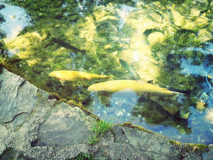 Fish Fish Water