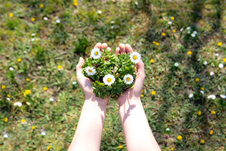 Midsection of person holding flower on plant
