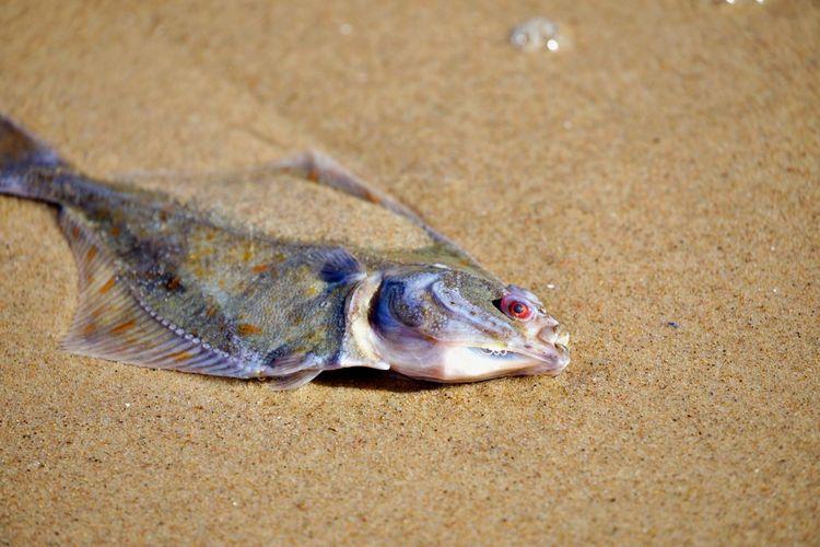 Close-up of fish on beach