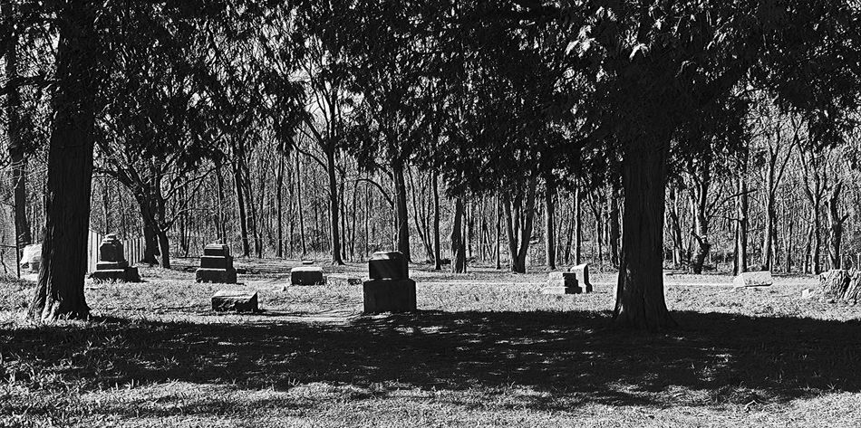 The infamous Bachelor Grove Cemetery outside Chicago, Ill. Cemetary Cemetery Cemetery Photography Cemetery_shots Cemeteryscape Creepy Creepy Woods Day Grass Nature Outdoors Park Shadow Tranquil Scene Tranquility Tree Tree Trunk Treelined
