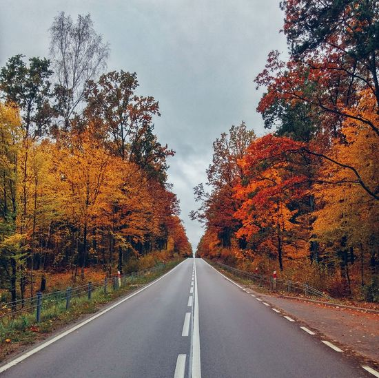 Road Autumn The