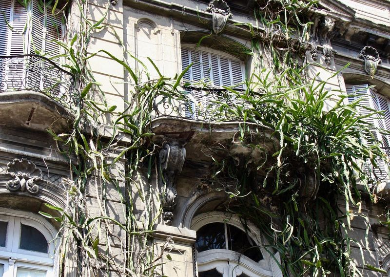 Architecture Argentina Balcony Buenos Aires Building Exterior Built Structure Day Ivy Low Angle View Neglected Neglected Architecture No People Outdoors Plant Residential Building Travel Destinations Window First Eyeem Photo