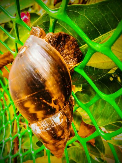 Perspectives On Nature Close-up Leaf One Animal Animal Themes Beauty In Nature Snail🐌 Snail Closeup