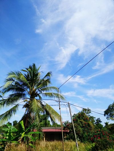 Hometown view ~ Low Angle View Sky No People Tree Day Outdoors Nature Passion