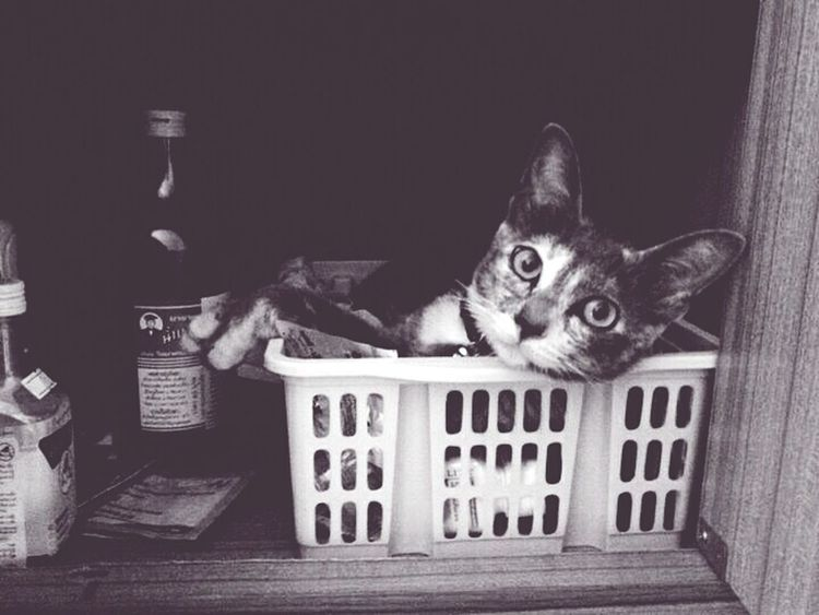 Cat Animal Photography What? Crazy Moments Blackandwhite