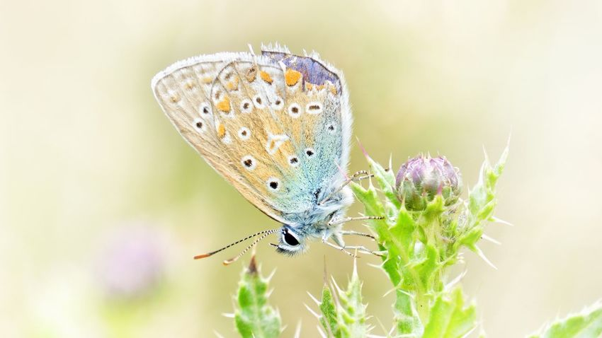 Butterfly Butterflies Butterfly ❤ Animal Flower Close-up Closeup Small Size Special Holidays From My Point Of View Summer ☀ Aquarell Colours Pastel Colors Sony NEX Eyem Gallery Enjoying Life Moments Lonely Better Together Capture The Moment Romantic Somewhere